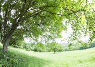 午后的阳光穿过树木图片(36张)