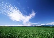 草原和蔚蓝的天空图片(16张)