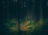 山林中的小路图片(15张)