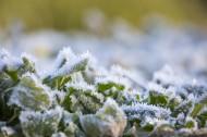 植物冰挂现象图片(11张)