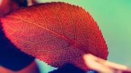 唯美红叶风景图片(13张)