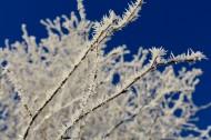上了霜的树叶图片(12张)