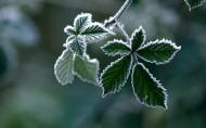 霜下的大自然图片(22张)