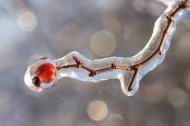 结冰的树枝图片(11张)