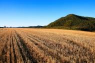 金黄色麦田风景图片(7张)