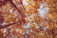 秋天景色图片(20张)