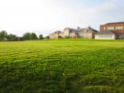 平坦的草地图片(11张)