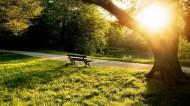 幽静的自然景色图片(9张)