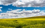 美丽的田野图片(15张)