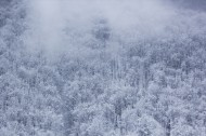 银装素裹的冬季图片(10张)