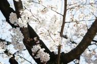 春天公园花朵图片(10张)