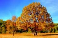 平原上的树图片(10张)