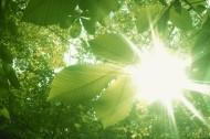 绿荫阳光图片(55张)