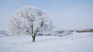 坝上草原冬景雾凇图片(6张)
