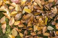 秋季凋零的枯黄落叶图片(11张)