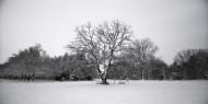 雪地里的树图片(10张)