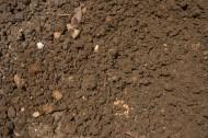 地面土壤图片(9张)