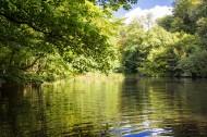 森林风景图片(6张)