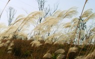 芦苇塘风景图片(13张)