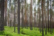 阳光透过整齐树林的图片(12张)