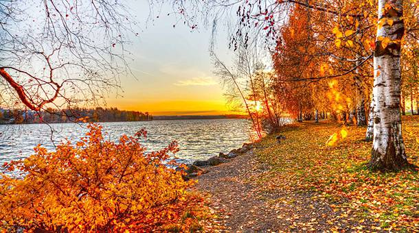 秋日湖边枫树林唯美风景图片